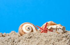 Seashell And Starfish Stock Image