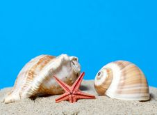 Seashell And Starfish Royalty Free Stock Image