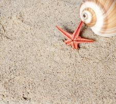 Free Seashell And Starfish Royalty Free Stock Images - 23289779