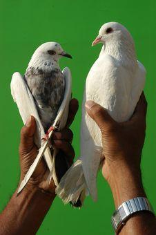 Free Birds Royalty Free Stock Photo - 23292715