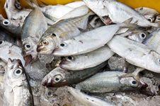 Free Fresh Fish At The Market Royalty Free Stock Photography - 23297947