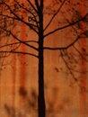 Free Tree Shadow Stock Photo - 2330000