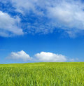 Free Barley Field Over Blue Sky Royalty Free Stock Photos - 2338778
