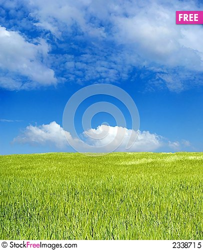 Barley field over blue sky Stock Photo