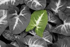Free Lonely Green Leaf. Royalty Free Stock Photo - 2331835