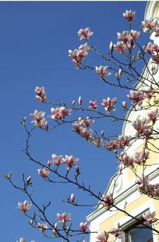 Free Spring Stock Photo - 2333160