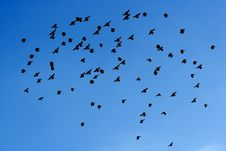 Free Many Flying Pigeons On Sky Stock Image - 2333291