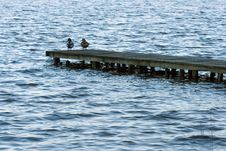 Free Dock On A Lake With Ducks Royalty Free Stock Photo - 2333305
