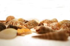 Free Seashells. Royalty Free Stock Image - 2334136