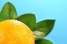 Free Orange With Blue Sky Stock Photo - 2334740