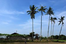 Free Coconut Trees And Farm House Royalty Free Stock Photos - 2335528