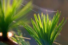 Free Cobweb On The Grass Stock Photography - 2335722