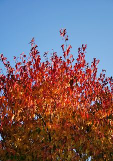 Free Autumn Stock Photography - 2335842