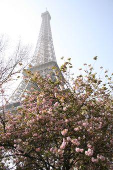Free The Eiffel Tower, Paris - 8 Royalty Free Stock Photo - 2335995