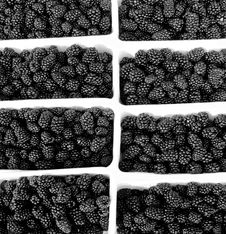Free Blackberry Royalty Free Stock Photos - 2337148