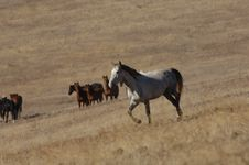 Free Wild Horse Standing Out Royalty Free Stock Image - 2337626