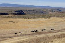 Free Wild Horses On The Praire Stock Photo - 2337630