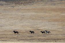 Free Wild Horses Running Royalty Free Stock Image - 2337636
