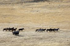 Wild Horses Running Stock Images