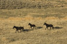 Three Wild Horses On Hillside Royalty Free Stock Image