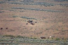 Herd Of Wild Horses Royalty Free Stock Photos