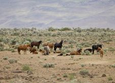 Free Wild Horses Standing In Sage Stock Photo - 2337840