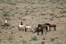 Wild Horses With Young Colt Stock Photo