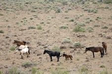 Wild Horses With Young Colt Stock Photography