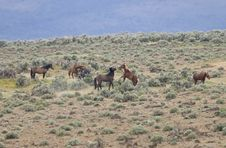 WIld Horses Fighting Stock Images