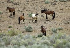 Free Wild Horses Standing In Sage Royalty Free Stock Photos - 2337898