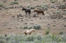 Three Wild Horses On Hillside Stock Photos