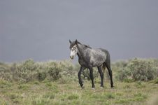 Free Wild Horse Walking Stock Photo - 2338020