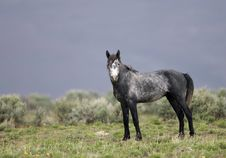 Free Wild Horse Walking Royalty Free Stock Photo - 2338035