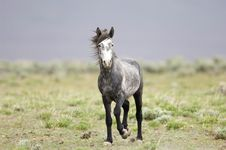 Wild Horse Standing Alone Stock Images