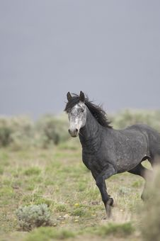 Free Wild Horse Standing Alone Stock Photography - 2338052