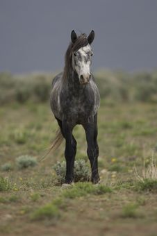 Wild Horse Standing Alone Royalty Free Stock Image