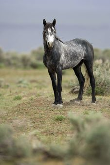 Wild Horse Standing Alone Stock Image