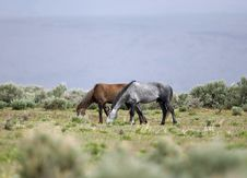 Wild Horses Grazing Stock Photo