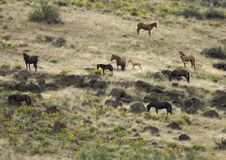 Wild Horses On Hillside Royalty Free Stock Photography