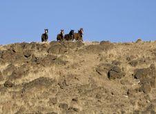 Free Wild Horses On Ridgeline Stock Images - 2338204