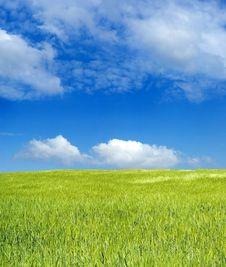 Free Barley Field Over Blue Sky Royalty Free Stock Photo - 2338715