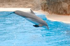 Free Dolphin Stock Photo - 2339040