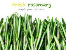 Free Fresh Rosemary Royalty Free Stock Photo - 23300375
