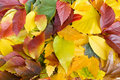 Free Autumn Leaves Royalty Free Stock Image - 23314086