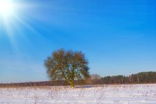 Lonely Tree In The Snow Covered Field Royalty Free Stock Photography