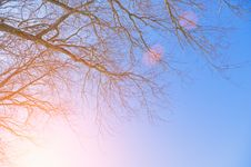 Free A Branch Of A Tree At Sunset Stock Images - 23315184