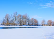 Trees On Bank Of The River Covered With Ice Royalty Free Stock Photo