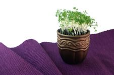 Free Pot With Cress Royalty Free Stock Photography - 23316177