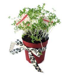 Free Pot With Cress Stock Photos - 23316203