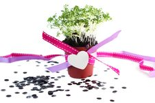 Free Decorated Pot With Cress Royalty Free Stock Image - 23316236